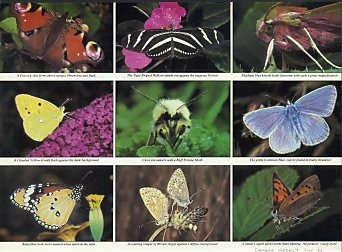 Butterfly feature in Camera Weekly magazine